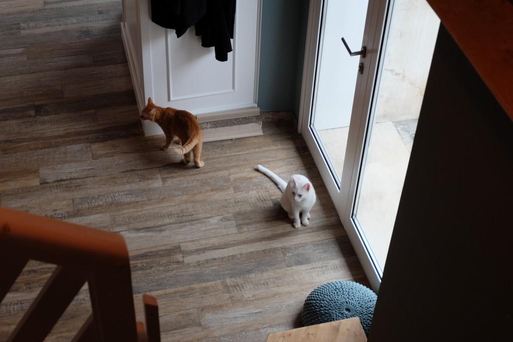 cats at romeow