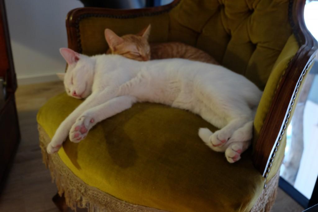 cats rome bistro