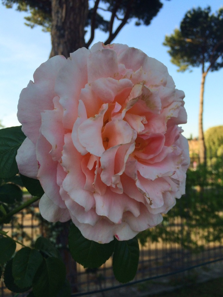 rose garden rome