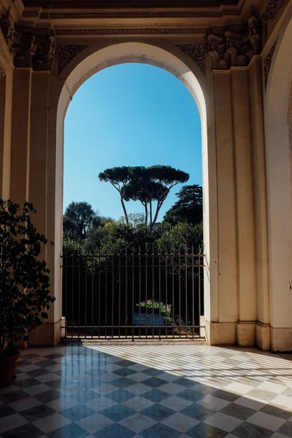 umbrella pine framed by arch