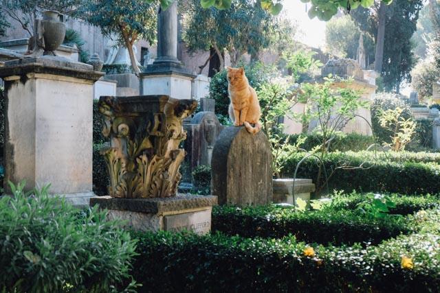 Cat in Rome cemetery