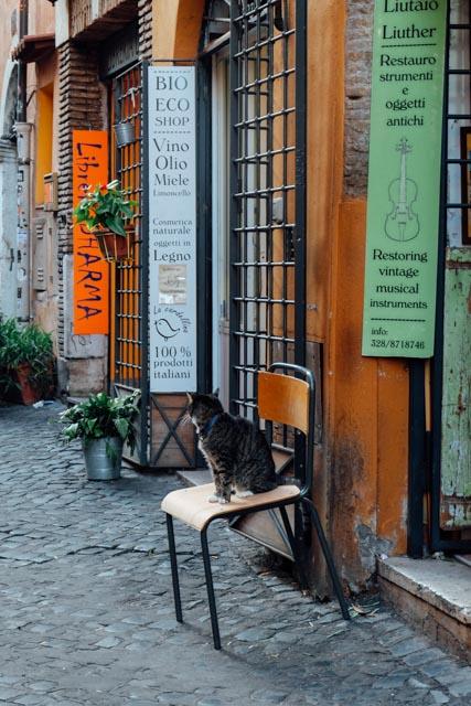 Cats in Trastevere