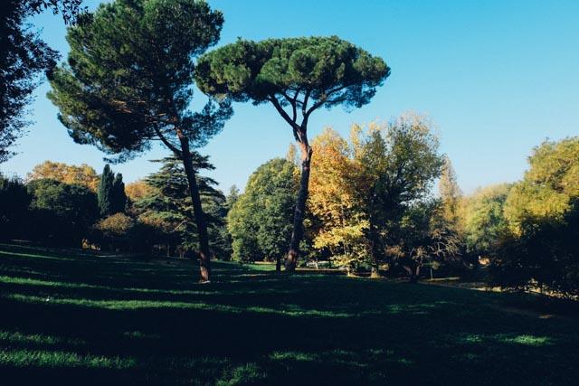 Umbrella pines in Villa Borghese