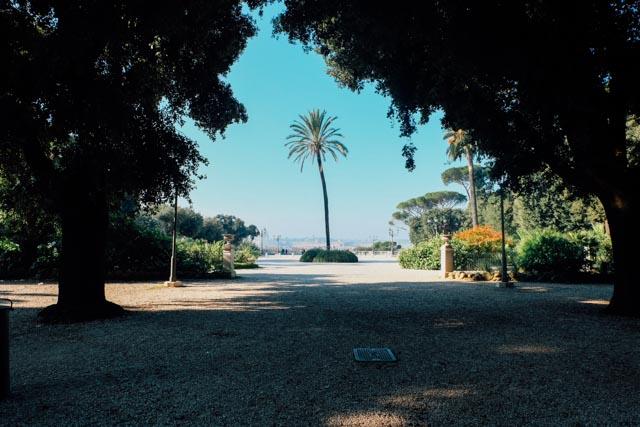 Pincio palm tree