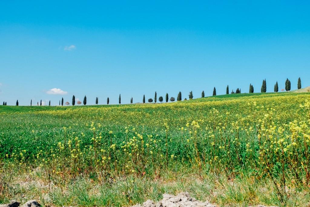 Siena hills in Spring