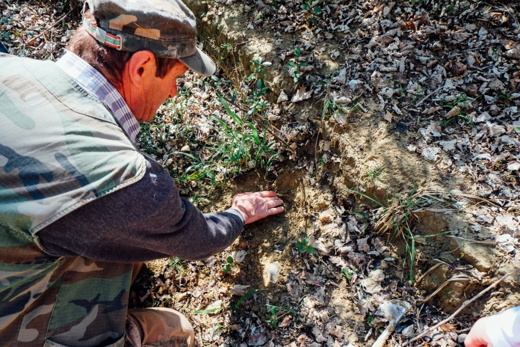 uncovering truffles in the groun