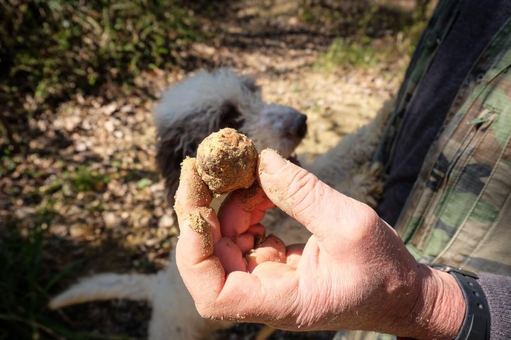 white truffles of Tuscany