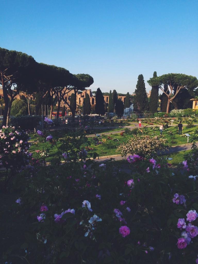 Rome Rose Garden by circo massimo
