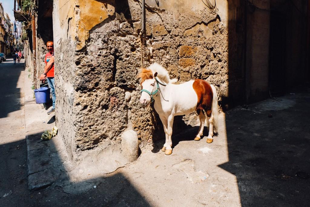 Palermo pony