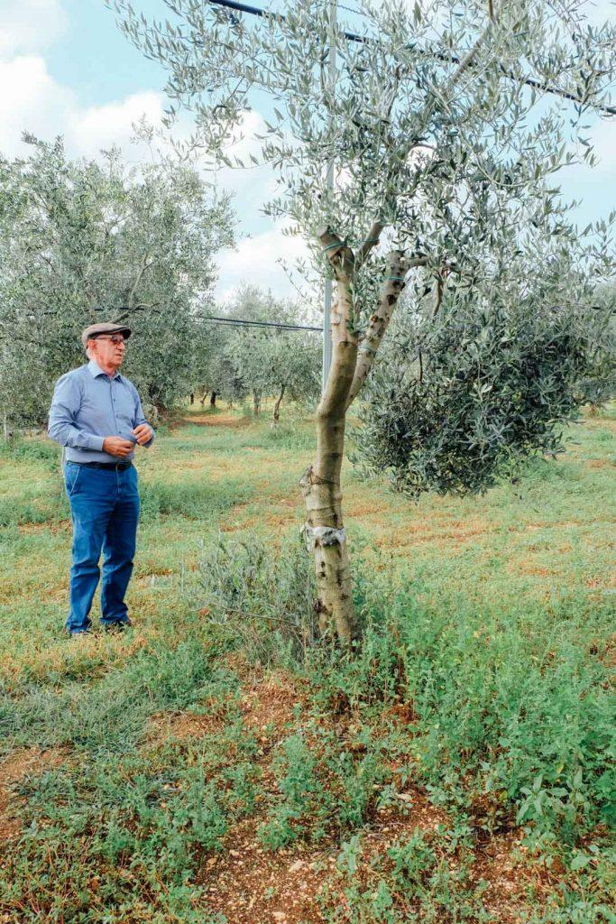 Portrait of Saveria De Carlo standing in his olive grove in Puglia Italy