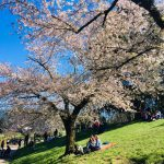 two women sit in the grass under cherry blossoms in EUR in Rome